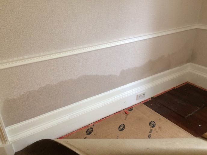 Signs of damp in property rising above skirting board