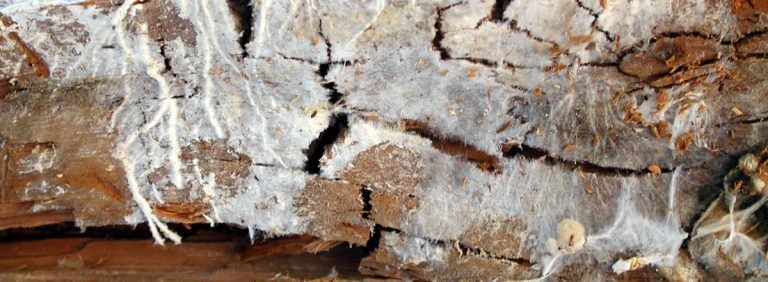 Signs of damp. Timber with wet rot